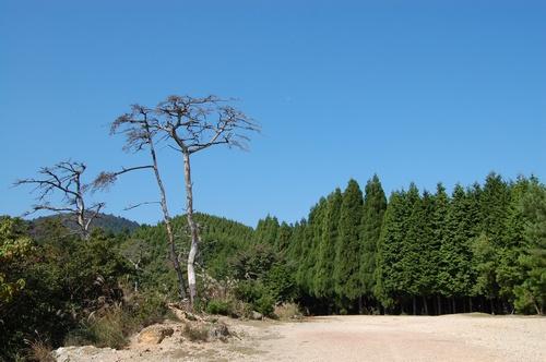 谷山林道風景