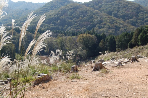 谷山林道風景①