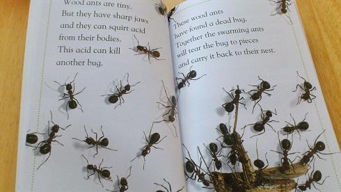 bugsbugs-ants.jpg