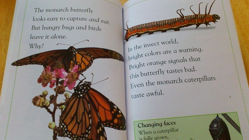 bugsbugs-butterfly.jpg