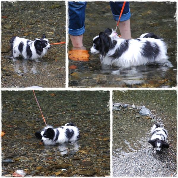 川で遊ぶルビー