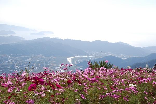 有田川と海とコスモス