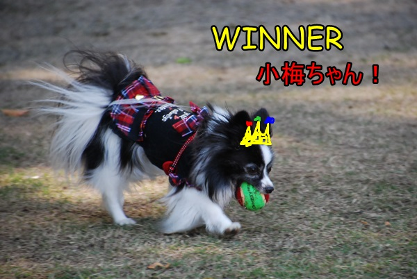 WINNER小梅ちゃん