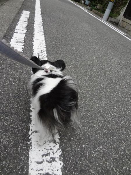 お散歩中4