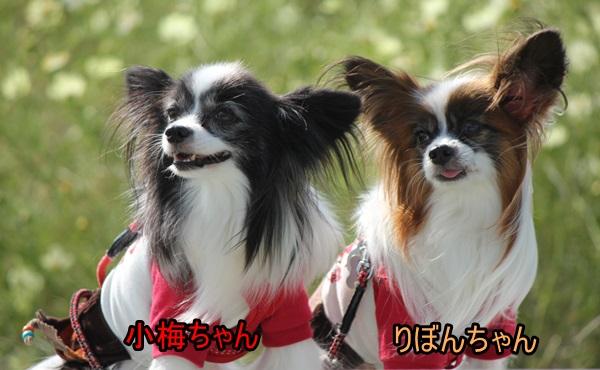 小梅ちゃん&りぼんちゃん