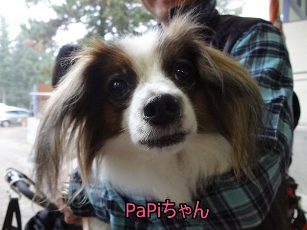 PaPiちゃん