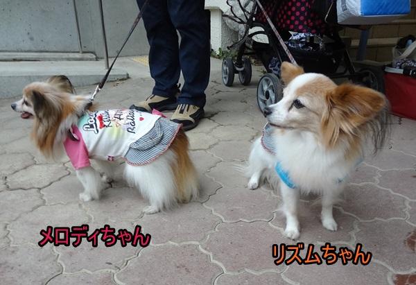 メロディちゃん&リズムちゃん