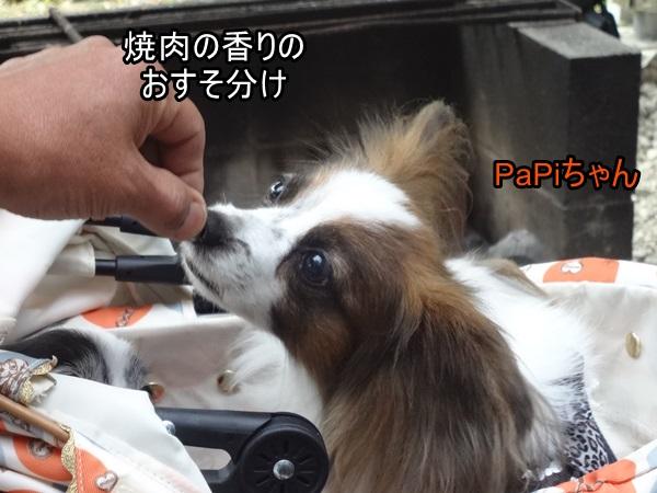 PaPiちゃんクンクン