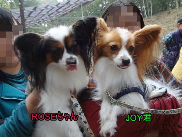 ROSEちゃん&JOY君