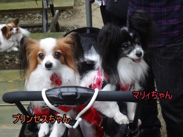 プリンセスちゃん&マリィちゃん