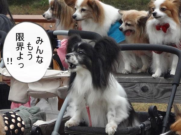 集合写真(マリィちゃん)