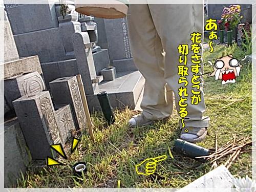 DSCN9295.jpg