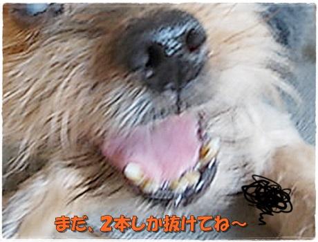 DSCN9690.jpg