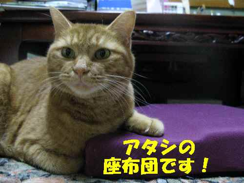 ako_20120828.jpg