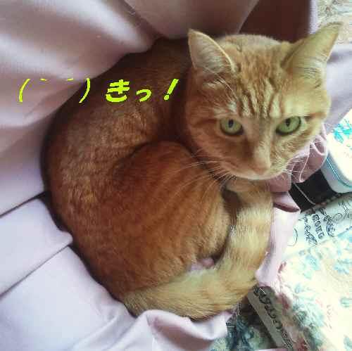 ako_201209072112.jpg