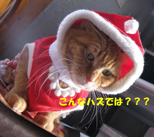 ako_201212241655.jpg