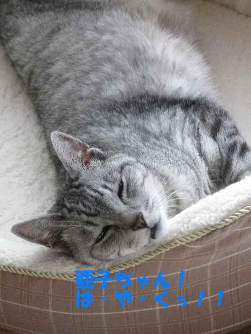 boo_201209051757.jpg