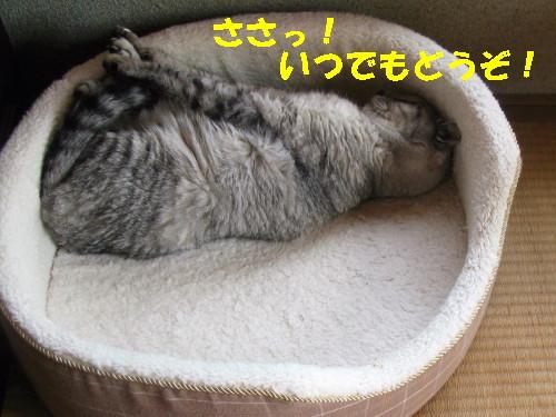 boo_20121026134.jpg
