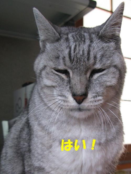 boo_20121105_1.jpg