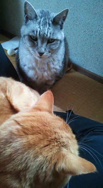 boo_20121223.jpg