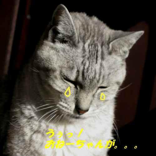 boo_201212281931.jpg