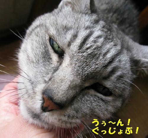 boo_201301051842.jpg