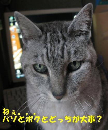 boo_201301200855.jpg