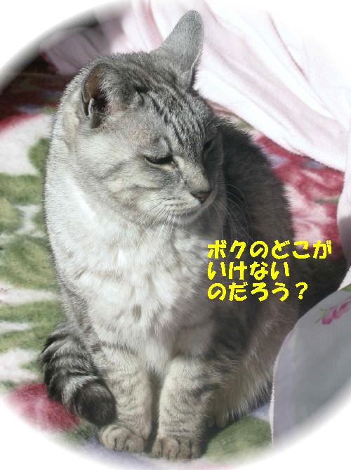 boo_20130127.jpg