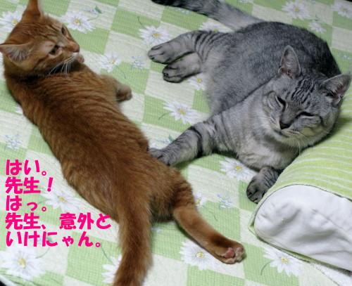 booako_201210051905.jpg