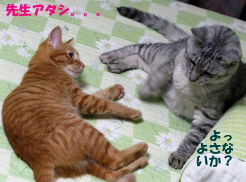 booako_201210051906.jpg