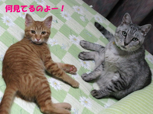 booako_201210051907.jpg