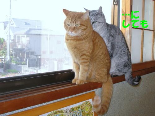 booako_201210230719.jpg