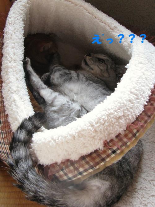 booako_201211122127.jpg