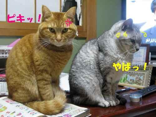 booako_201211291701_1.jpg