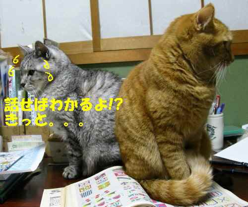 booako_201211291704_1.jpg