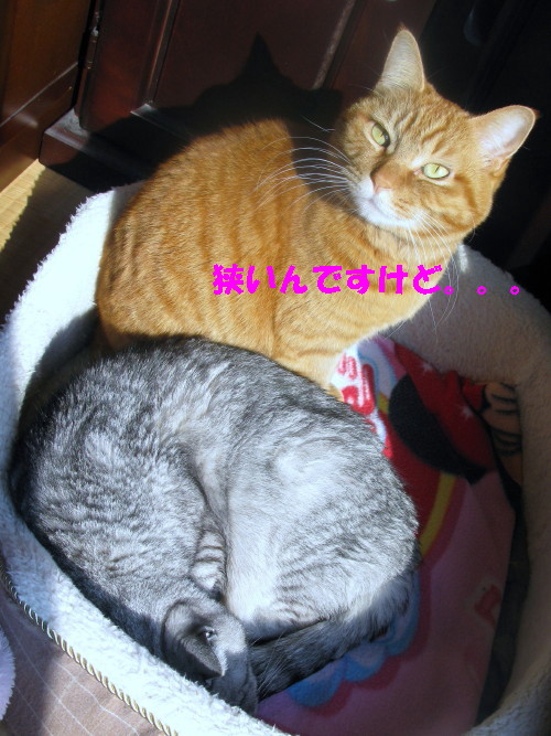 booako_201301301104.jpg