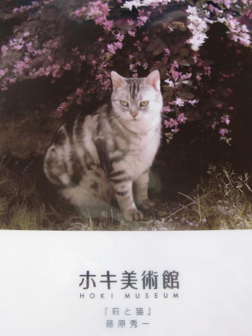 hoki_201212141251.jpg