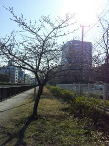 fc2_2013-02-24_01-09-12-268.jpg