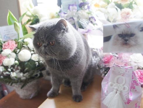 12)たくさんのお花