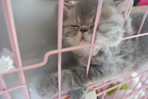 8)クラノスケちゃん爆睡