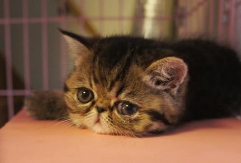 1)初猫(はつね)日本猫?