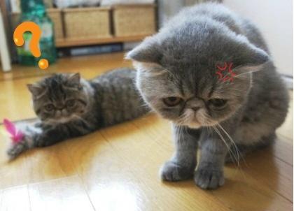 7)お怒りモード