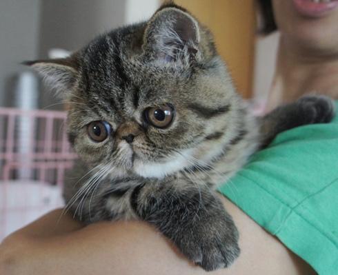 17)日本猫的かわいさ