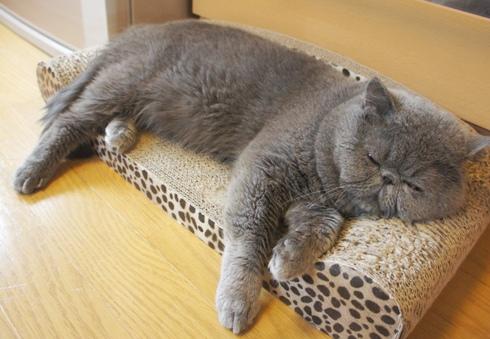 15)寝ているように見えまずか。