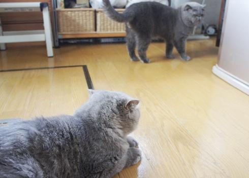 1.4)まるにーたん!