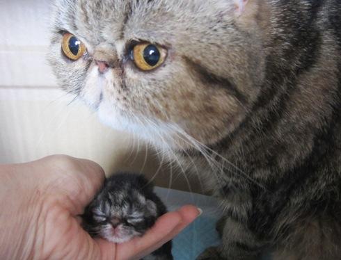 2)うじゅママとここなちゃん