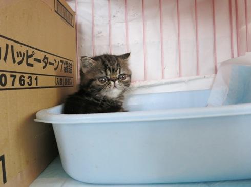 4)トイレがお気に入りの場所(笑)