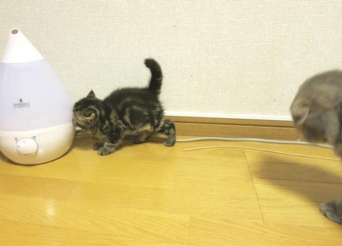 5)ぷくたんから逃げる~