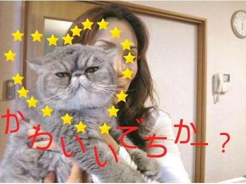 13)かわいいでちかー