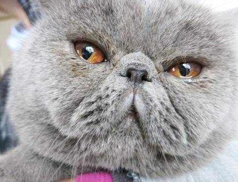 3)秘儀!猫背のばちゃん!!